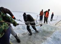 Workers Take Ice from Songhua River for Building the Park of 2014 Harbin Ice and Snow World
