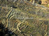 Yuanyang Bada Rice Terraces