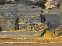 Yuanyang Bada Rice Terraces in December