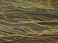 The Beautiful Curves of Bada Rice Terraces