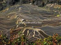 Bada Rice Terraces in Yuanyang