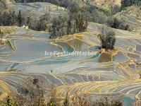 Yuanyang Bada Rice Terraces in January