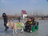 "<a href=""http://www.icefestivalharbin.com/photo-p42-424-.html"">Goat Sledging </a>"