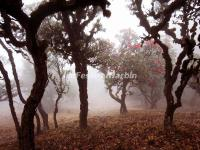 The Beautiful Azaleas in Dali Cangshan Mountain