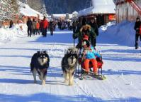 Dog Sleighing in China's Snow Town