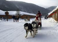 Dog Sledding in China's Snow Town