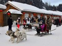 Tourists Enjoy Dog-sleging in China's Snow Town