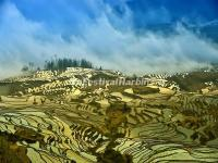 Duoyishu Rice Terraces in Yuanyang
