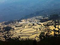 Duoyishu Rice Terraces Yuanyang