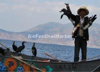 Erhai Lake Cormorant Fishing