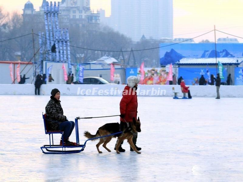 Dog Sled in Harbin Ice and Snow Happy Valley 2015