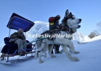 Harbin Ice Festival Join-in Group Tour- Image_10