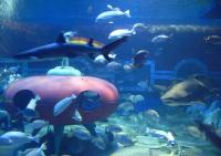 Fishes in Harbin Polarland
