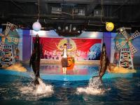 Dolphin Show in Harbin Polarland