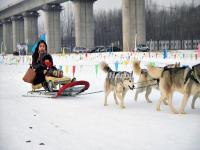 Harbin Dog Sledding