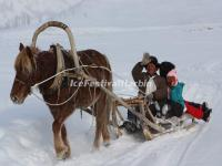 Harbin Horse Sledding