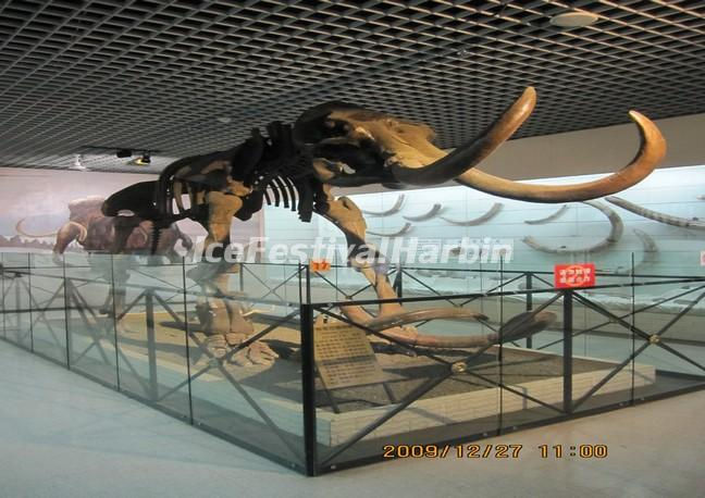 The Animal Fossil in Heilongjiang Provincial Museum