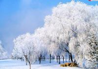The Beautiful Rime in the Bank of Songhua River in Jilin City