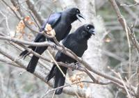 Jiuzhaigou Valley Birding