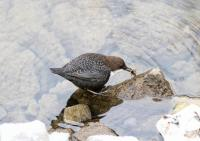 Jiuzhaigou Valley Bird Watching