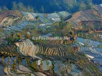 Yuanyang Tiger Mouth Rice Terraces