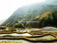 The Morning Break in Laohuzui Rice Terraces