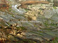 Tiger Mouth Rice Terraces