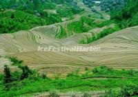 Longsheng Rice Terrace in Spring