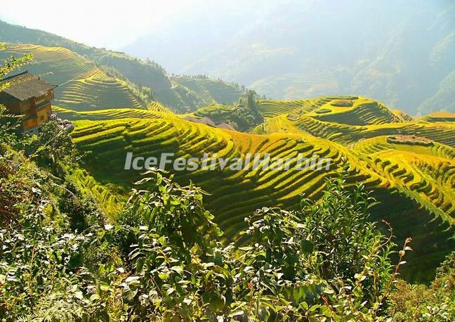 Longsheng Rice Terraces in Autumn