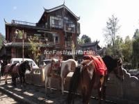 Horses for Rent in Lijiang Shuhe Ancient Town