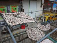 Dry Fish in Tai O Fishing Village
