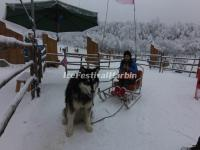 Xiling Snow Mountain Dog Sledging