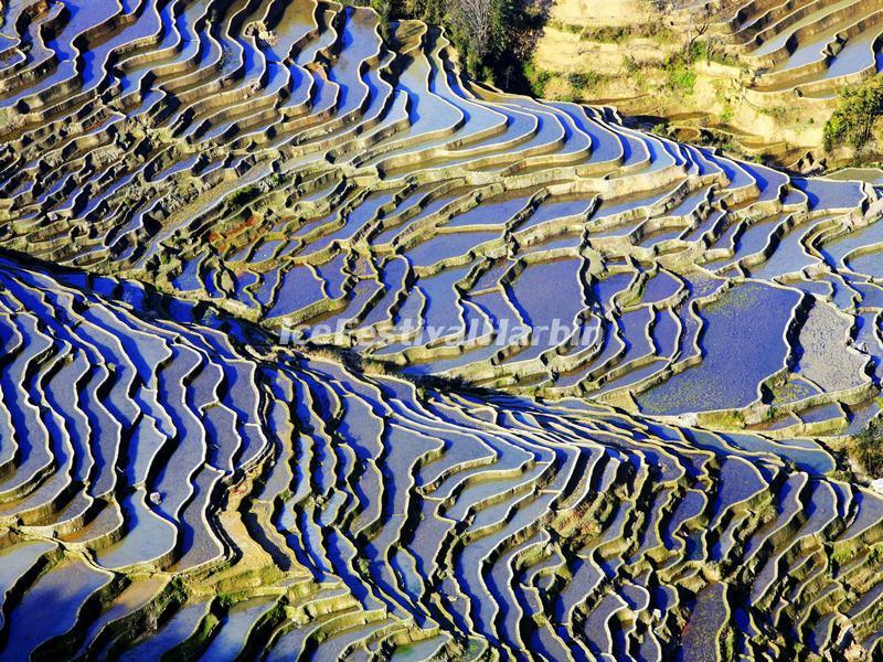 The Blue Rice Terraces, Yuanyang