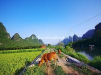 Yulong River in Summer, Yangshuo